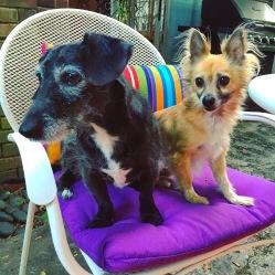 Patio dogs